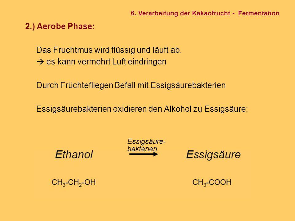 2.) Aerobe Phase: Das Fruchtmus wird flüssig und läuft ab.  es kann vermehrt Luft eindringen Durch Früchtefliegen Befall mit Essigsäurebakterien Essi