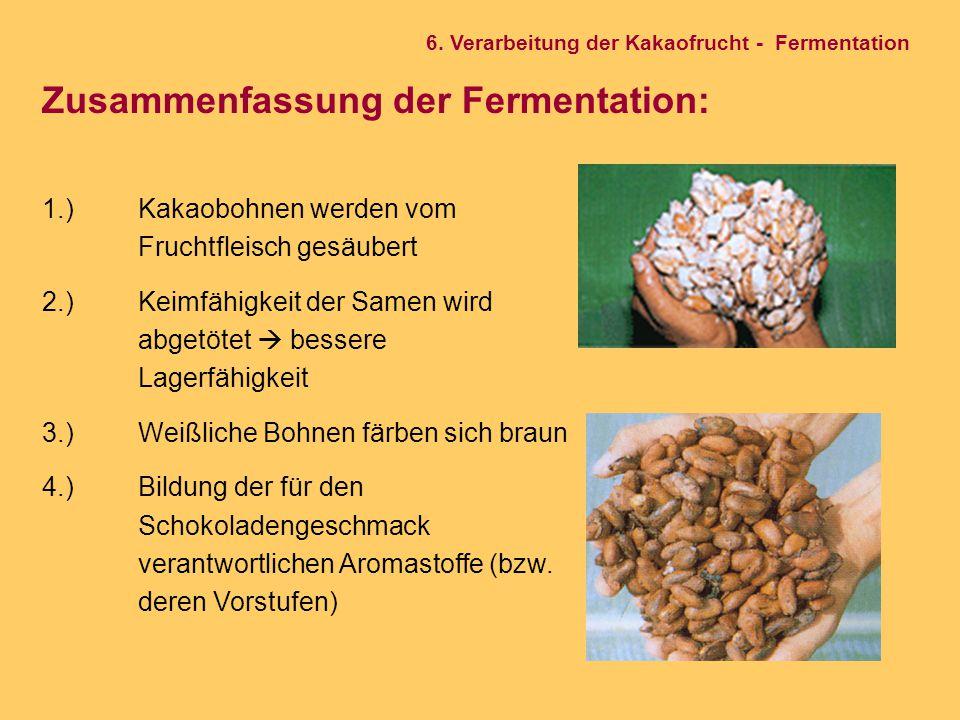 Zusammenfassung der Fermentation: 1.) Kakaobohnen werden vom Fruchtfleisch gesäubert 2.) Keimfähigkeit der Samen wird abgetötet  bessere Lagerfähigke