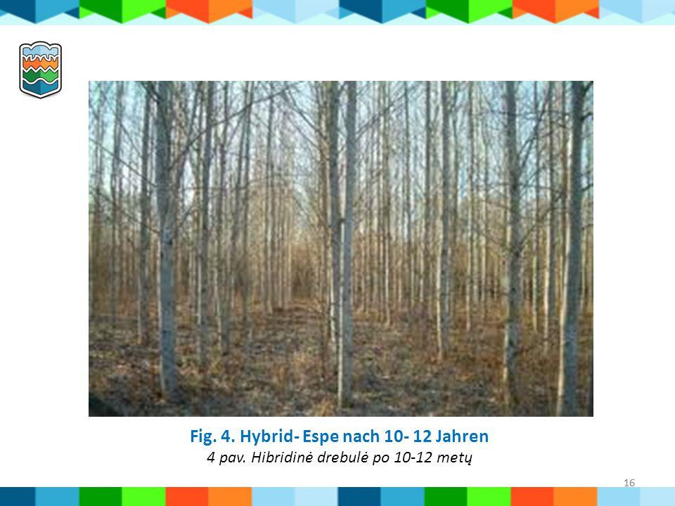 16 Fig. 4. Hybrid- Espe nach 10- 12 Jahren 4 pav. Hibridinė drebulė po 10-12 metų 16