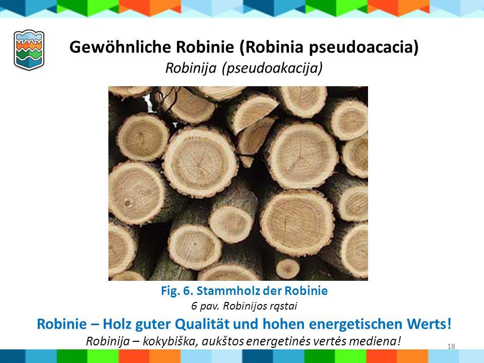 18 Fig. 6. Stammholz der Robinie 6 pav. Robinijos rąstai Gewöhnliche Robinie (Robinia pseudoacacia) Robinija (pseudoakacija) Robinie – Holz guter Qual
