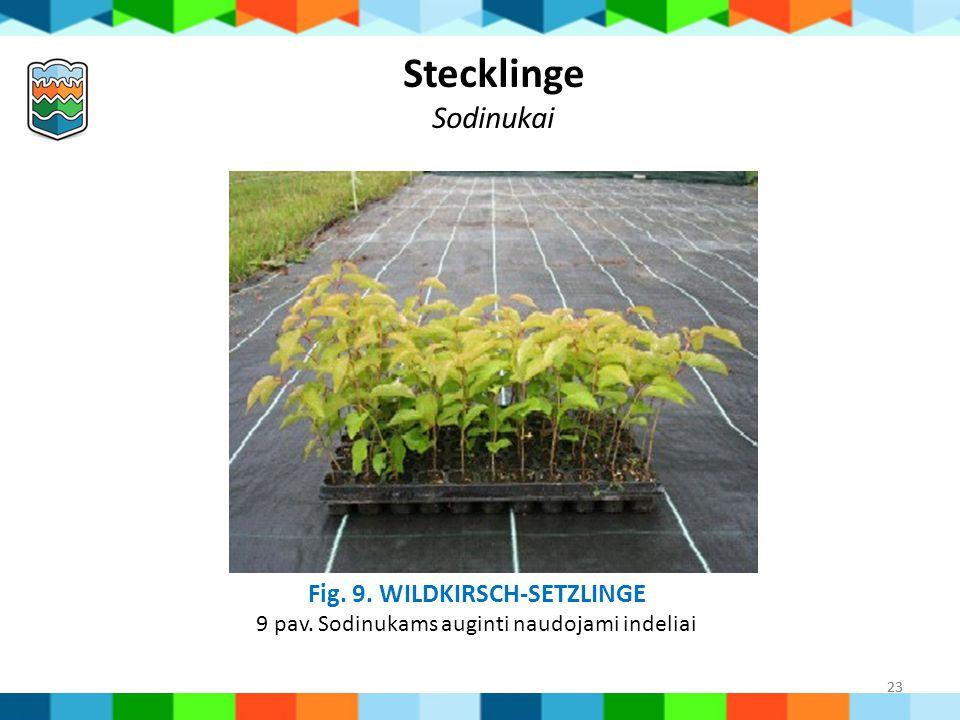 23 Fig. 9. WILDKIRSCH-SETZLINGE 9 pav. Sodinukams auginti naudojami indeliai Stecklinge Sodinukai 23