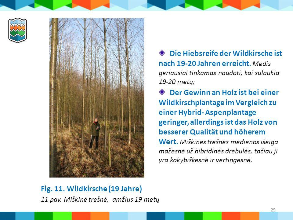 25 Fig. 11. Wildkirsche (19 Jahre) 11 pav. Miškinė trešnė, amžius 19 metų Die Hiebsreife der Wildkirsche ist nach 19-20 Jahren erreicht. Medis geriaus