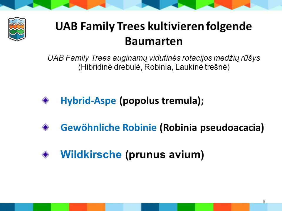 8 UAB Family Trees kultivieren folgende Baumarten UAB Family Trees auginamų vidutinės rotacijos medžių rūšys (Hibridinė drebulė, Robinia, Laukinė treš