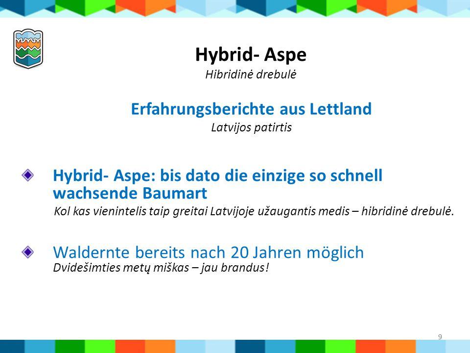 9 Hybrid- Aspe Hibridinė drebulė Hybrid- Aspe: bis dato die einzige so schnell wachsende Baumart Kol kas vienintelis taip greitai Latvijoje užaugantis