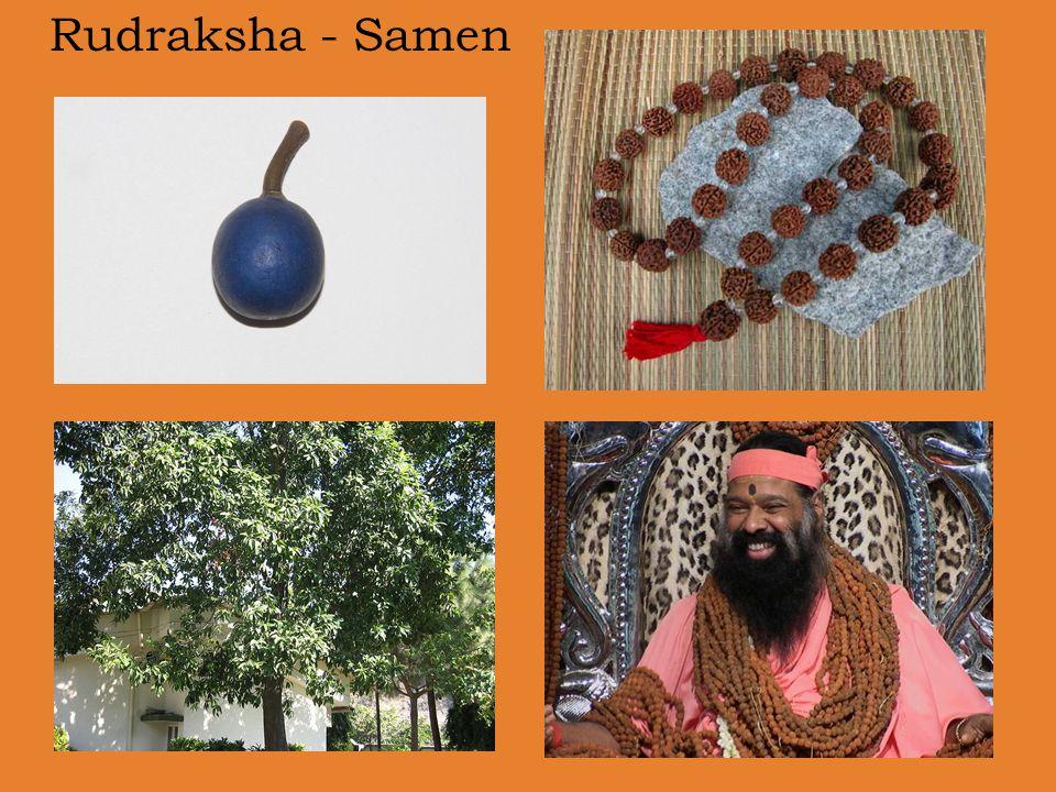 Rudraksha - Samen