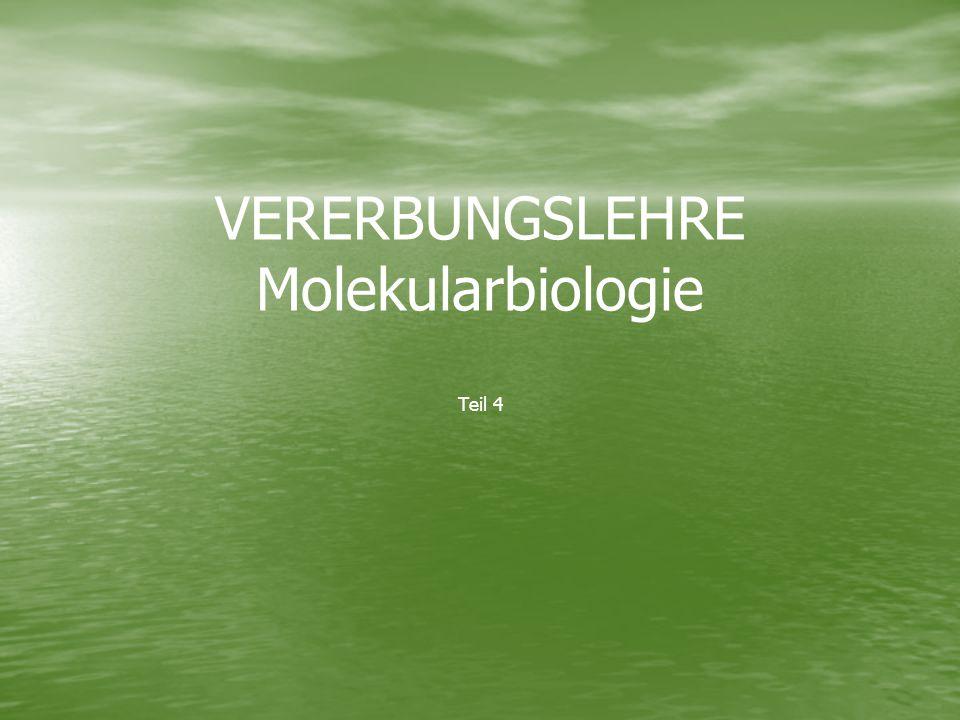 VERERBUNGSLEHRE Molekularbiologie Teil 4