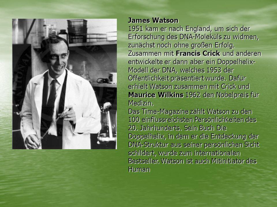 James Watson 1951 kam er nach England, um sich der Erforschung des DNA-Moleküls zu widmen, zunächst noch ohne großen Erfolg.