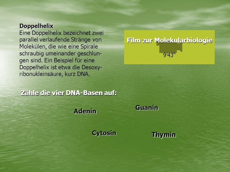 Film zur Molekularbiologie Film zur Molekularbiologie 9'43 Doppelhelix Eine Doppelhelix bezeichnet zwei parallel verlaufende Stränge von Molekülen, die wie eine Spirale schraubig umeinander geschlun- gen sind.
