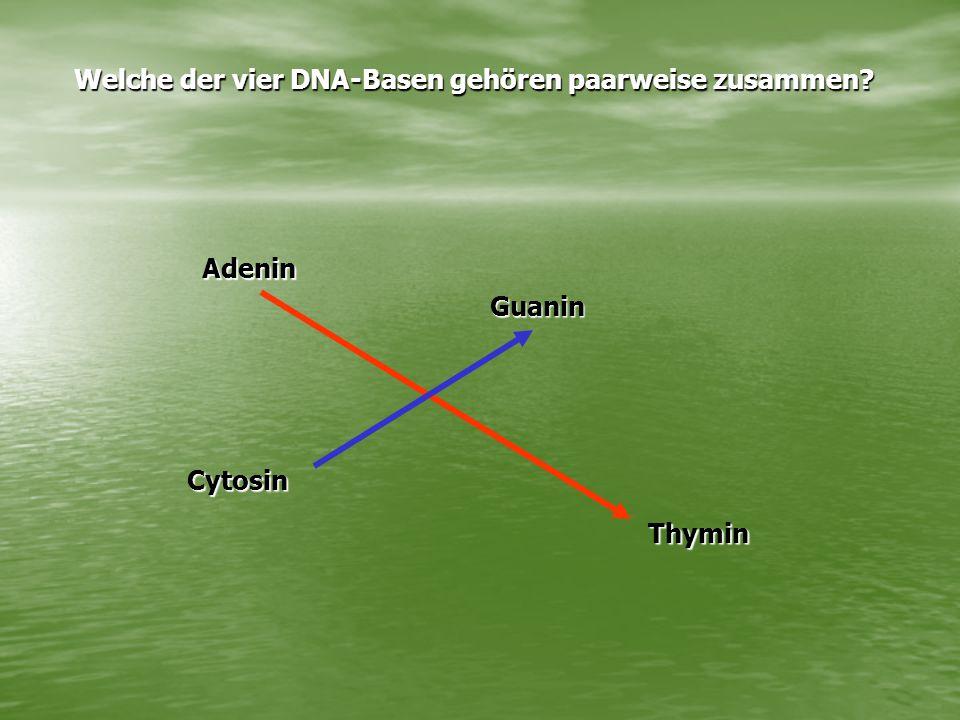 Welche der vier DNA-Basen gehören paarweise zusammen Adenin Cytosin Guanin Thymin