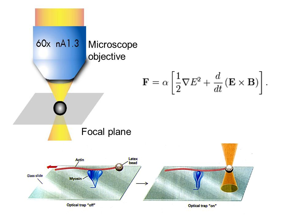Microscope objective Focal plane