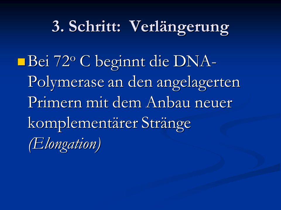 3. Schritt: Verlängerung Bei 72 o C beginnt die DNA- Polymerase an den angelagerten Primern mit dem Anbau neuer komplementärer Stränge (Elongation) Be