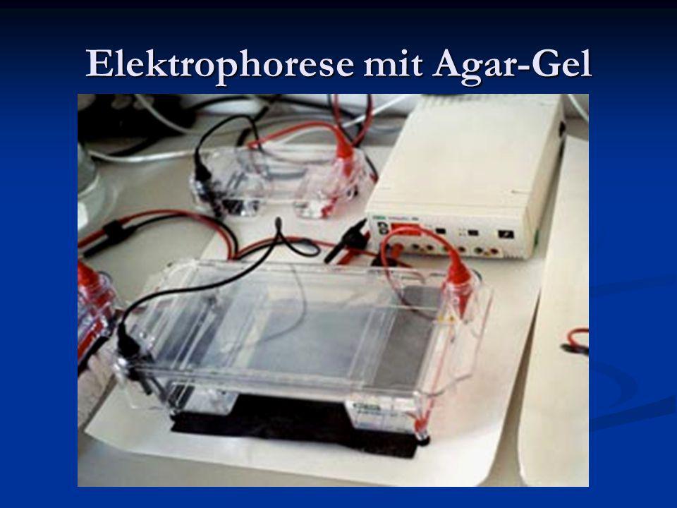 Elektrophorese mit Agar-Gel