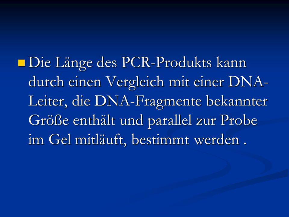 Die Länge des PCR-Produkts kann durch einen Vergleich mit einer DNA- Leiter, die DNA-Fragmente bekannter Größe enthält und parallel zur Probe im Gel m