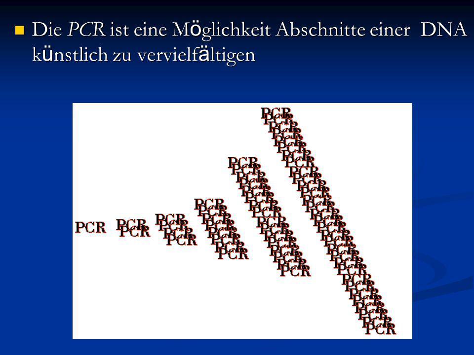 Die PCR ist eine M ö glichkeit Abschnitte einer DNA k ü nstlich zu vervielf ä ltigen Die PCR ist eine M ö glichkeit Abschnitte einer DNA k ü nstlich z