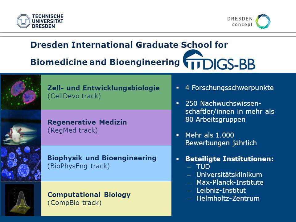 21 Dresden International Graduate School for Biomedicine and Bioengineering Zell- und Entwicklungsbiologie (CellDevo track) Regenerative Medizin (RegM