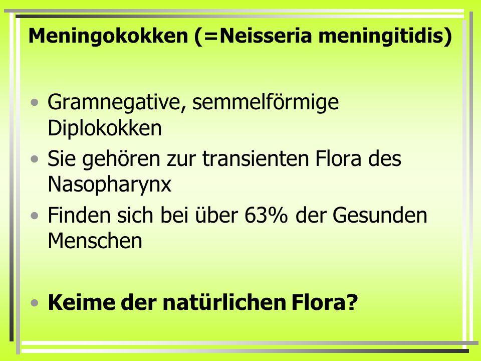 Meningokokken (=Neisseria meningitidis) Gramnegative, semmelförmige Diplokokken Sie gehören zur transienten Flora des Nasopharynx Finden sich bei über 63% der Gesunden Menschen Keime der natürlichen Flora?