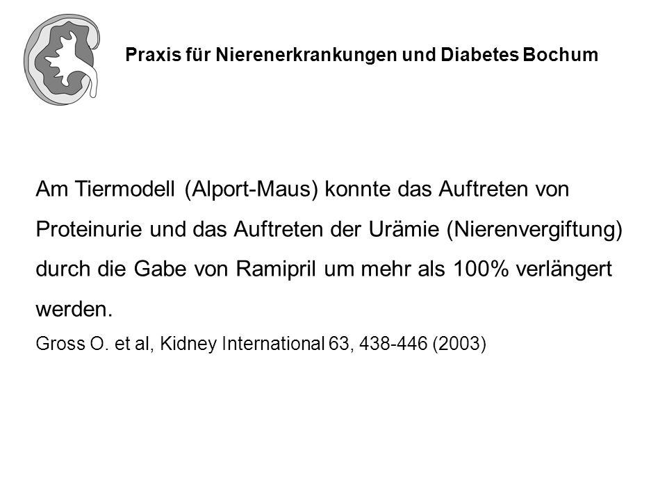 Praxis für Nierenerkrankungen und Diabetes Bochum Am Tiermodell (Alport-Maus) konnte das Auftreten von Proteinurie und das Auftreten der Urämie (Niere