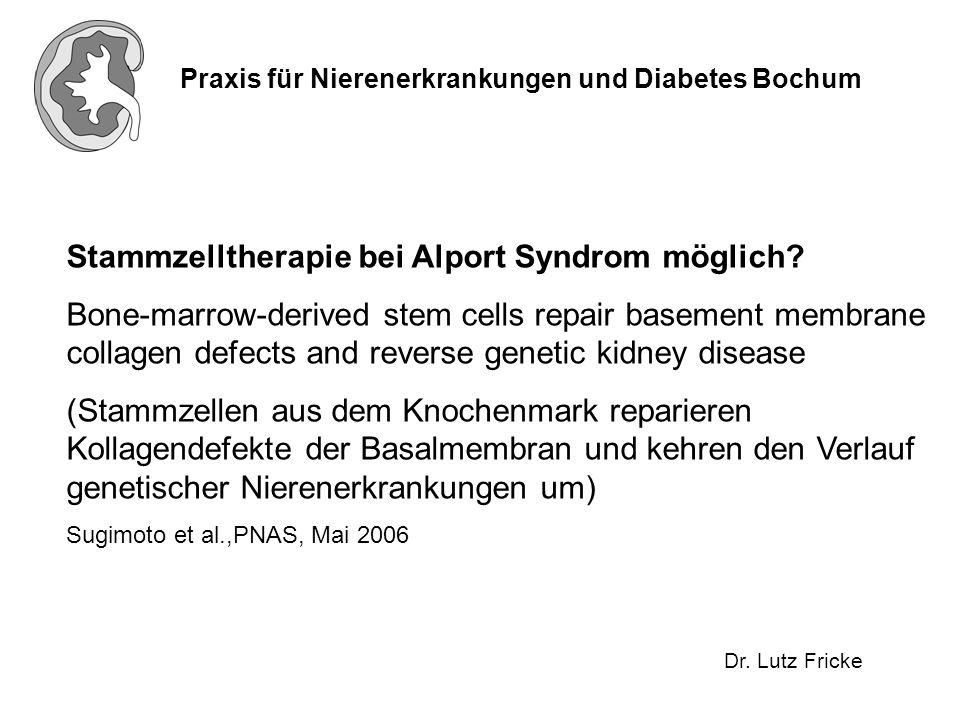 Praxis für Nierenerkrankungen und Diabetes Bochum Dr. Lutz Fricke Stammzelltherapie bei Alport Syndrom möglich? Bone-marrow-derived stem cells repair