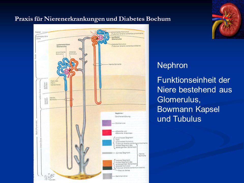 Praxis für Nierenerkrankungen und Diabetes Bochum Nephron Funktionseinheit der Niere bestehend aus Glomerulus, Bowmann Kapsel und Tubulus