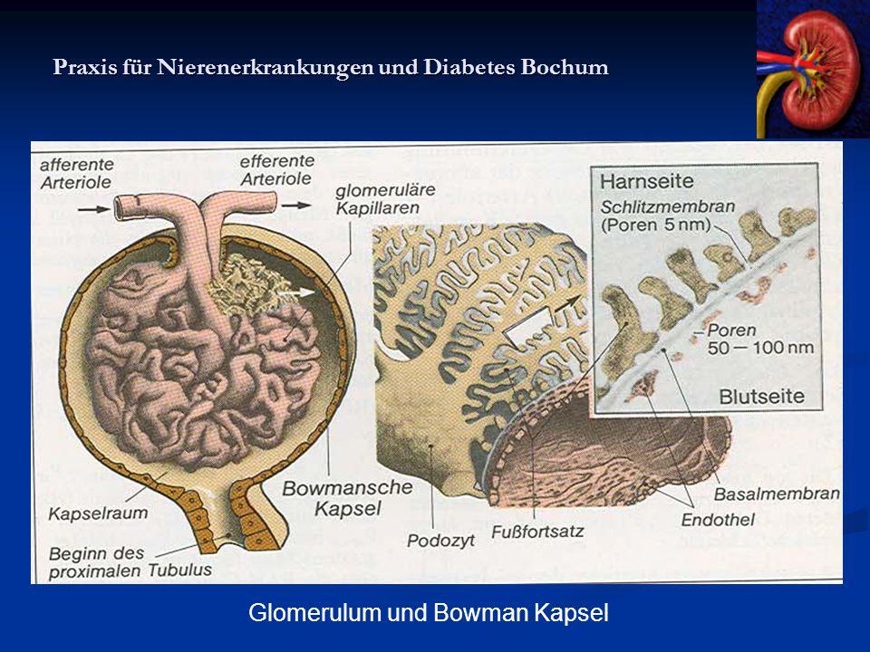 Praxis für Nierenerkrankungen und Diabetes Bochum Glomerulum und Bowman Kapsel