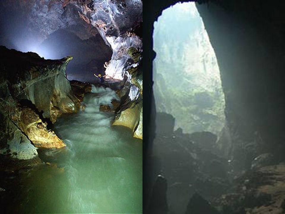 Dolinen entstehen, wenn die Höhlendecke nach innen stürtzt, dem Tageslicht ermöglicht einzuströmen und neue und einzigartige Ökosysteme zu bilden.