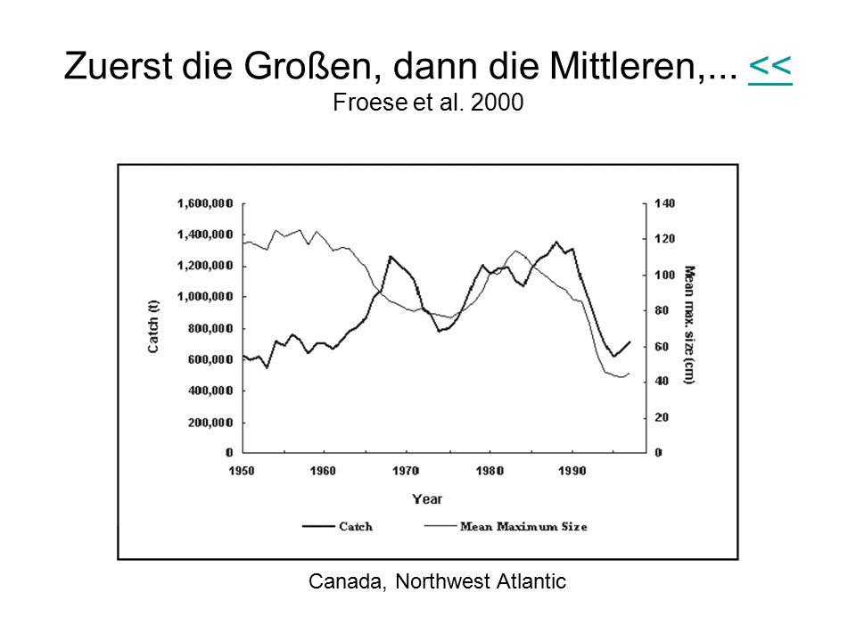 Zuerst die Großen, dann die Mittleren,... << Froese et al. 2000<< Canada, Northwest Atlantic