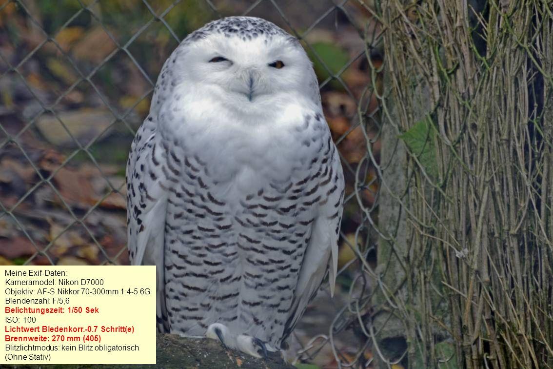 Meine Exif-Daten: Kameramodel: Panasonic Lumix TZ61 Blendenzahl: F/6 Belichtungszeit: 1/100 Sek ISO: 250 Brennweite: 90 mm Blitzlichtmodus: kein Blitz