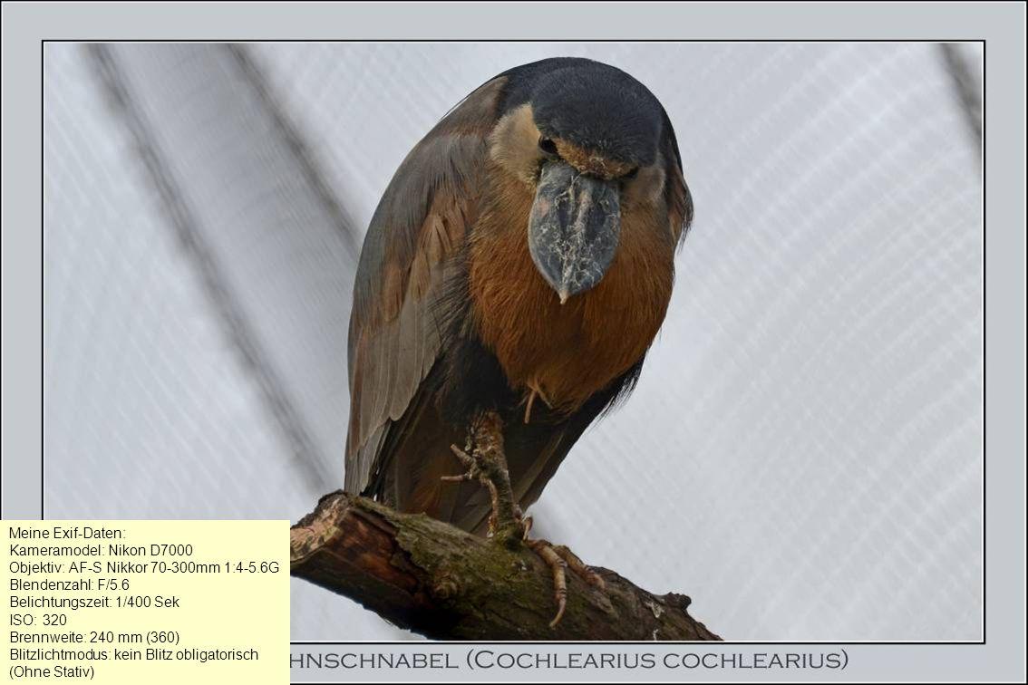 Meine Exif-Daten: Kameramodel: Nikon D7000 Objektiv: AF-S Nikkor 70-300mm 1:4-5.6G Blendenzahl: F/5.6 Belichtungszeit: 1/400 Sek ISO: 320 Brennweite: 240 mm (360) Blitzlichtmodus: kein Blitz obligatorisch (Ohne Stativ)