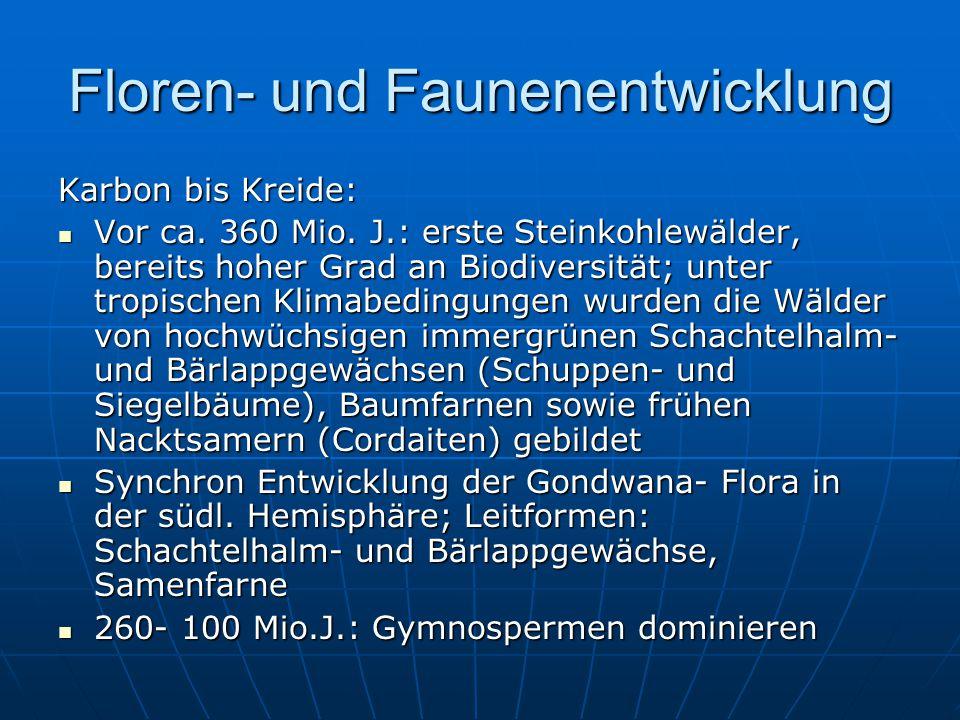 Floren- und Faunenentwicklung Karbon bis Kreide: Vor ca.