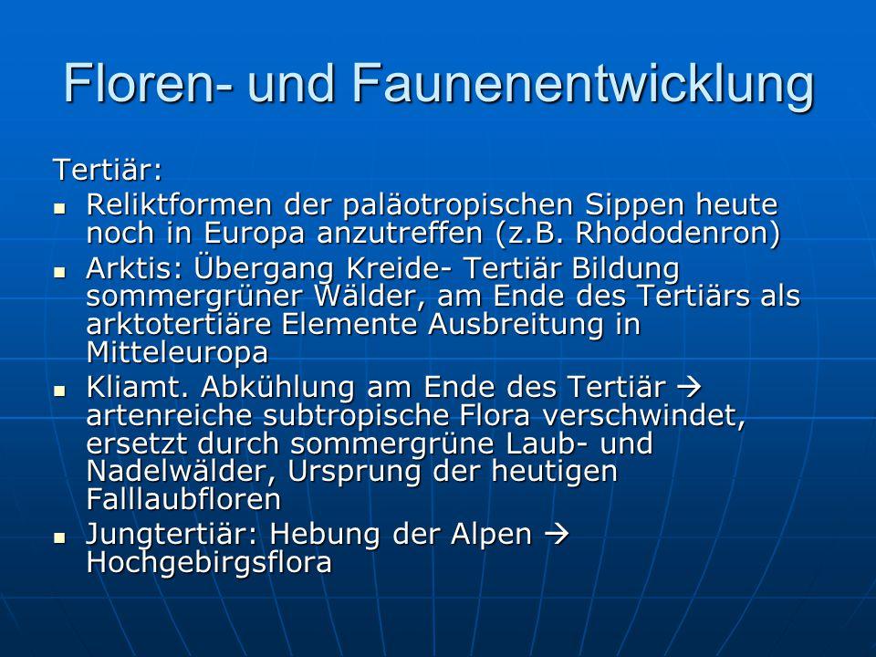 Floren- und Faunenentwicklung Tertiär: Reliktformen der paläotropischen Sippen heute noch in Europa anzutreffen (z.B.