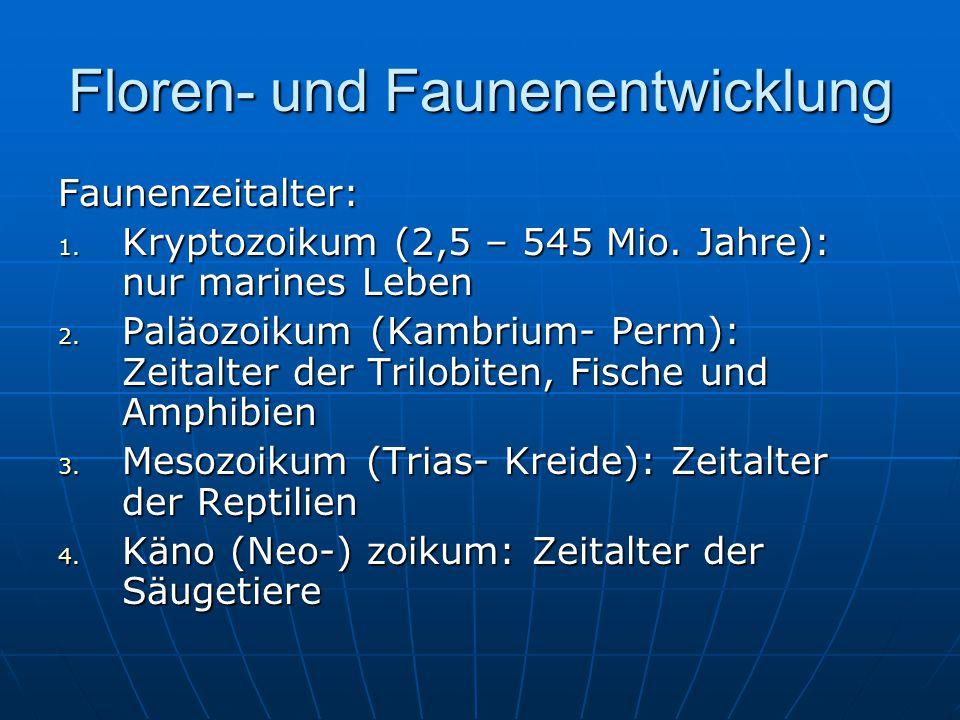 Floren- und Faunenentwicklung Faunenzeitalter: 1.Kryptozoikum (2,5 – 545 Mio.
