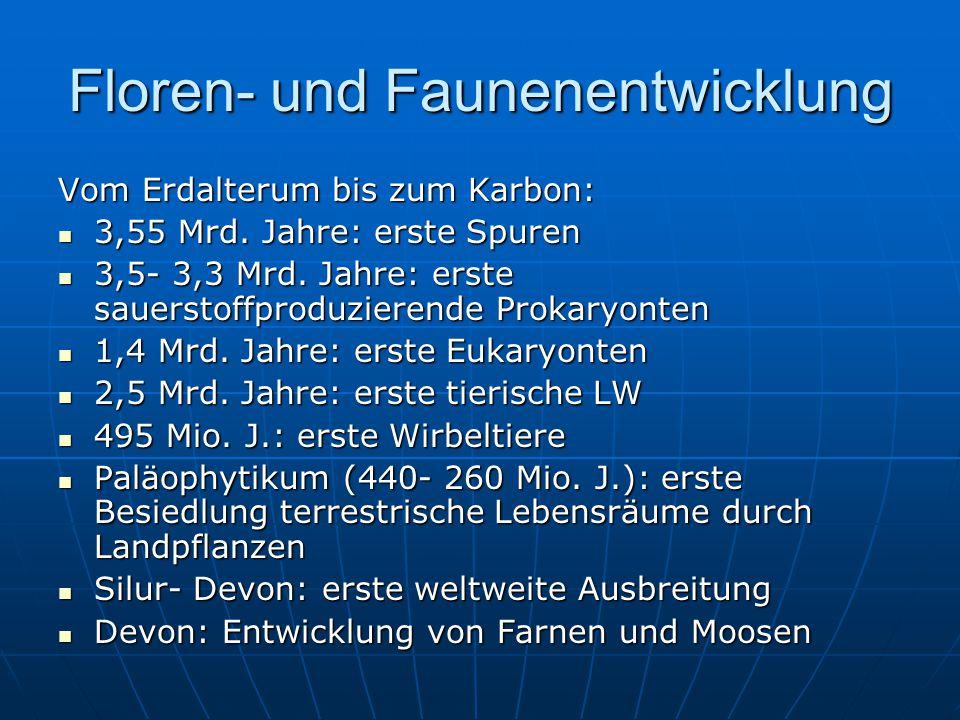 Floren- und Faunenentwicklung Vom Erdalterum bis zum Karbon: 3,55 Mrd.