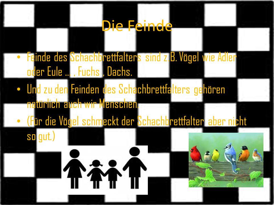 Die Feinde Feinde des Schachbrettfalters sind z.B. Vögel wie Adler oder Eule …, Fuchs, Dachs. Und zu den Feinden des Schachbrettfalters gehören natürl