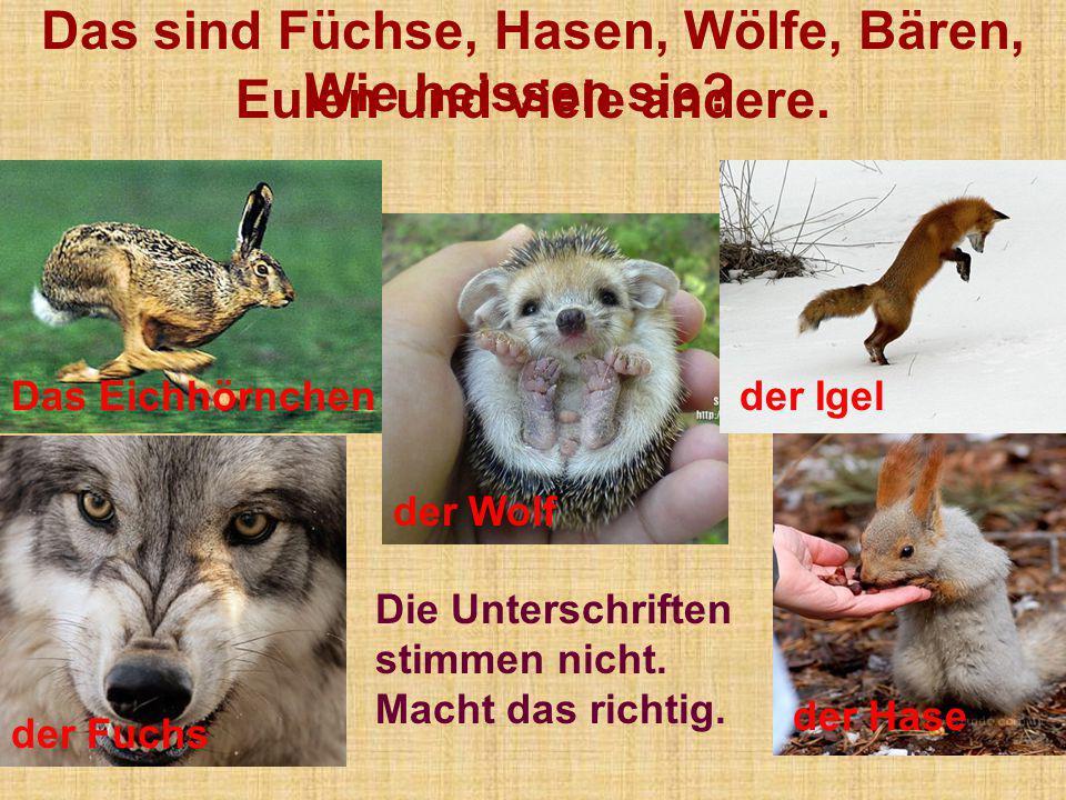 Das sind Füchse, Hasen, Wölfe, Bären, Eulen und viele andere. der Wolf der Fuchs der IgelDas Eichhörnchen der Hase Die Unterschriften stimmen nicht. M