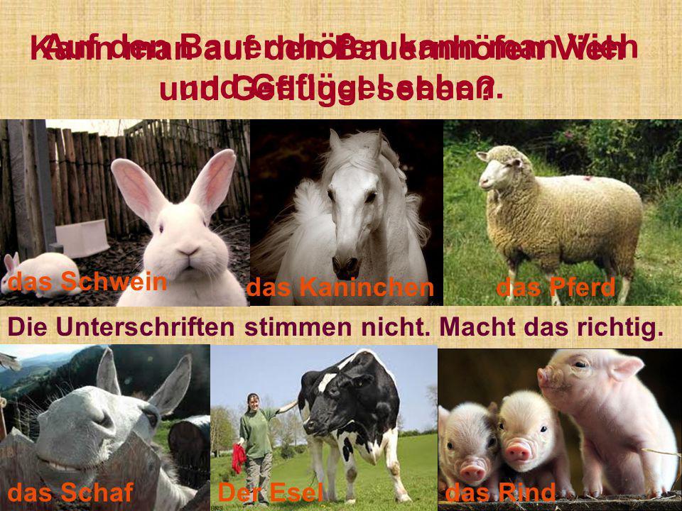 Auf den Bauernhöfen kann man Vieh und Geflügel sehen. Der Eseldas Schaf das Pferd das Schwein das Rind das Kaninchen Kann man auf den Bauernhöfen Vieh