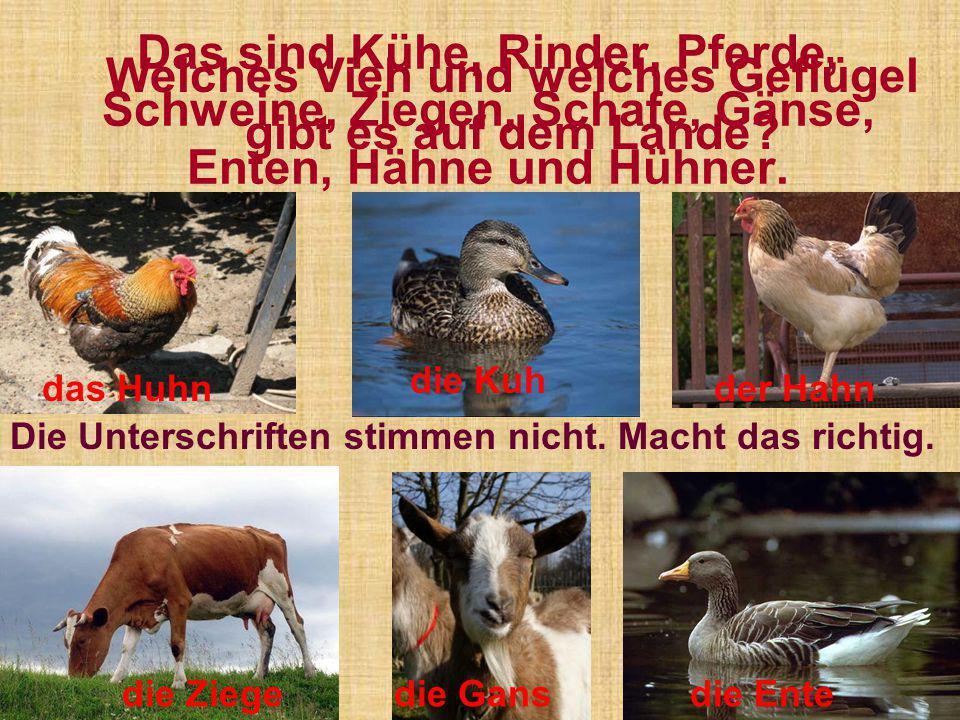 Das sind Kühe, Rinder, Pferde, Schweine, Ziegen, Schafe, Gänse, Enten, Hähne und Hühner. Die Unterschriften stimmen nicht. Macht das richtig. Welches