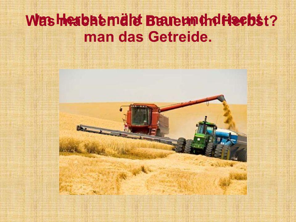 Im Herbst mäht man und drischt man das Getreide. Was machen die Bauern im Herbst?