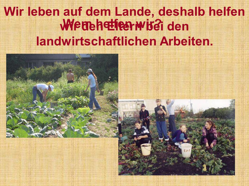 Wir leben auf dem Lande, deshalb helfen wir den Eltern bei den landwirtschaftlichen Arbeiten. Wem helfen wir?