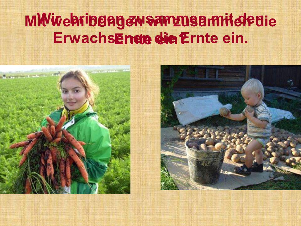 Wir bringen zusammen mit den Erwachsenen die Ernte ein. Mit wem bringen wir zusammen die Ernte ein?