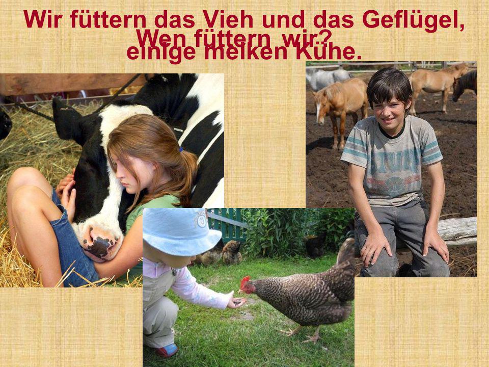 Wir füttern das Vieh und das Geflügel, einige melken Kühe. Wen füttern wir?