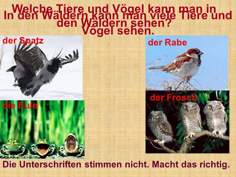 In den Wäldern kann man viele Tiere und Vögel sehen. der Rabe der Spatz der Frosch die Eule Welche Tiere und Vögel kann man in den Wäldern sehen? Die