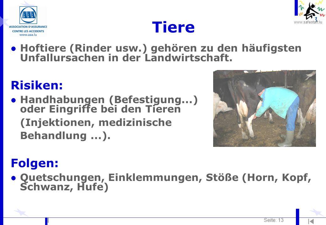 www.safestart.lu Seite: 13 Tiere l Hoftiere (Rinder usw.) gehören zu den häufigsten Unfallursachen in der Landwirtschaft. Risiken: l Handhabungen (Bef