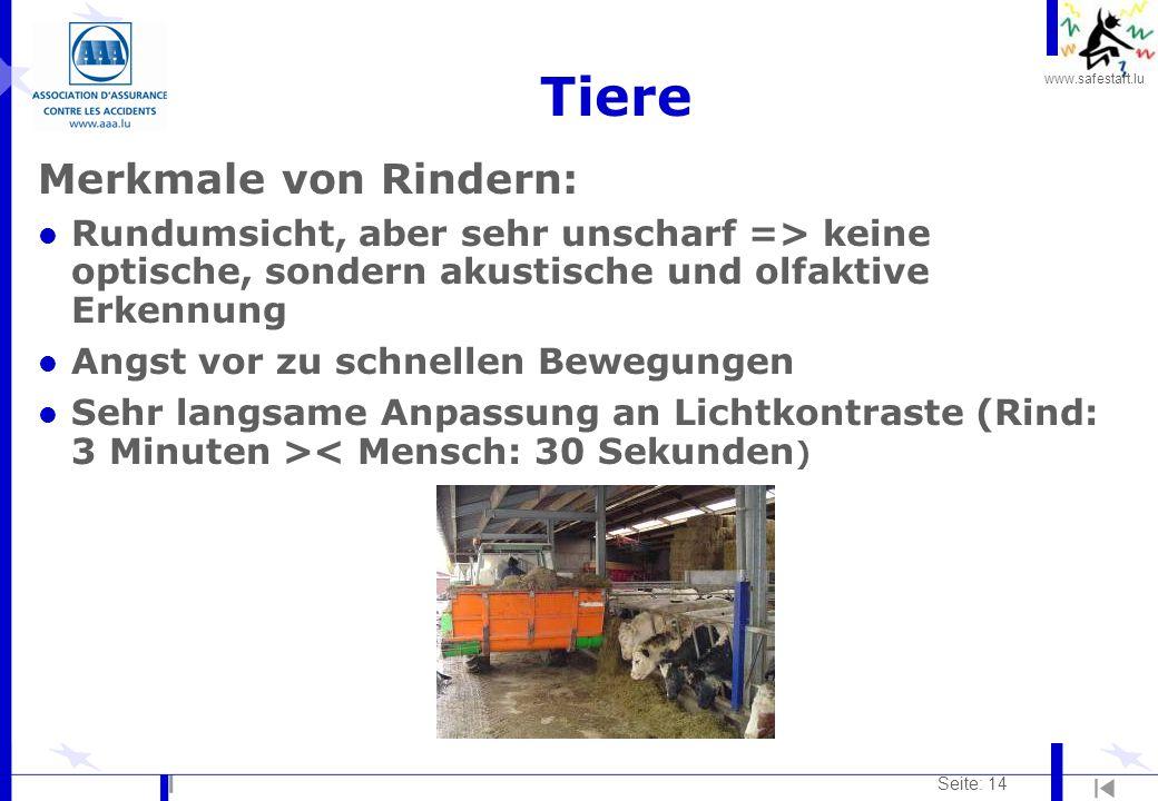 www.safestart.lu Seite: 14 Tiere Merkmale von Rindern: l Rundumsicht, aber sehr unscharf => keine optische, sondern akustische und olfaktive Erkennung