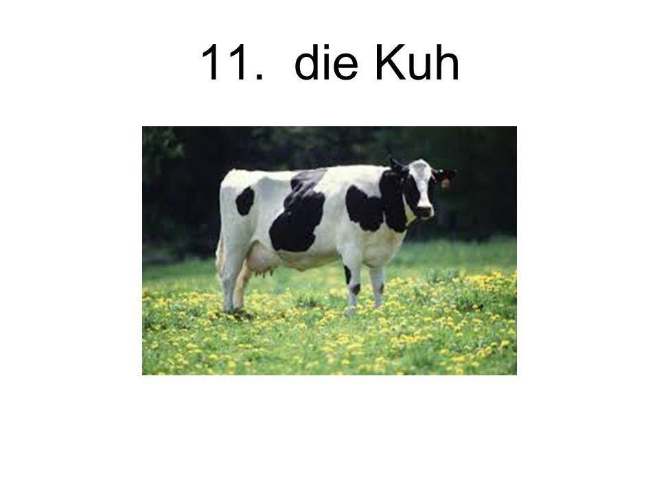 11. die Kuh