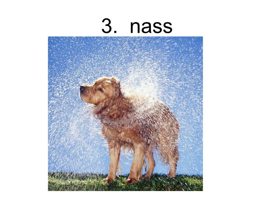 3. nass