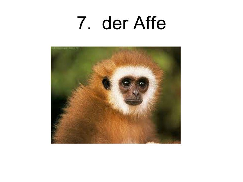 7. der Affe