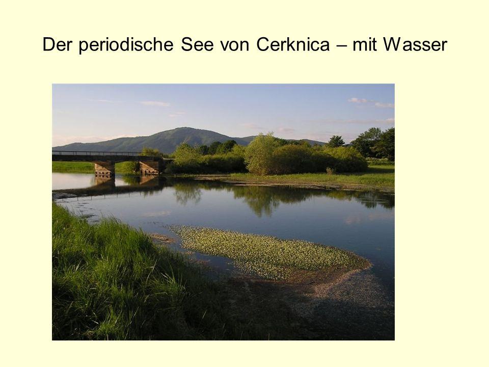 Der periodische See von Cerknica – mit Wasser