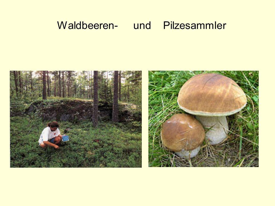 Waldbeeren- und Pilzesammler
