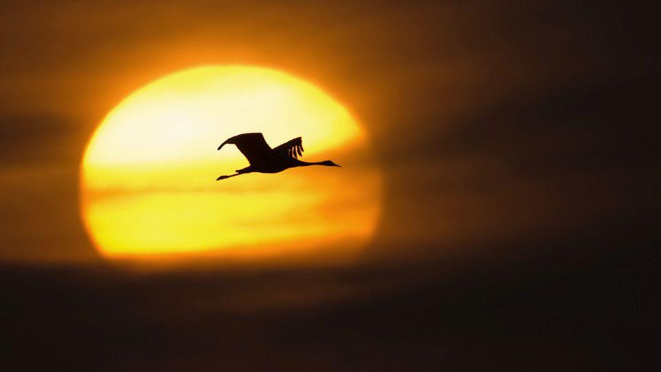 Du musst nur langsam genug gehen, um immer in der Sonne zu bleiben. Antoine de Saint-Exupéry