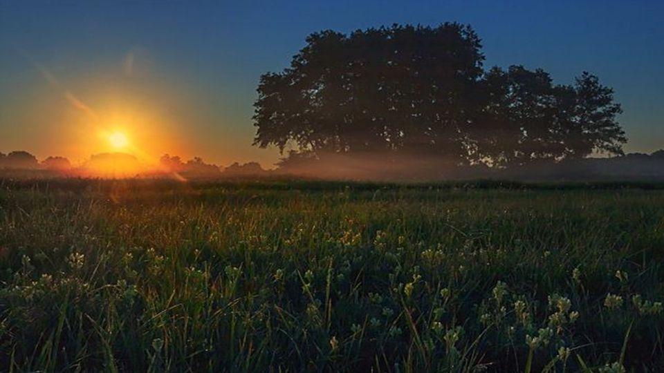 Betrachtet das Erwachen des Frühlings und das Erscheinen der Morgenröte! Die Schönheit offenbart sich denjenigen, die betrachten. Khalil Gibran